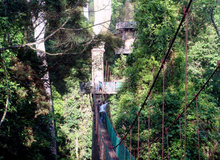 4D3N Danum Valley Rainforest Experience